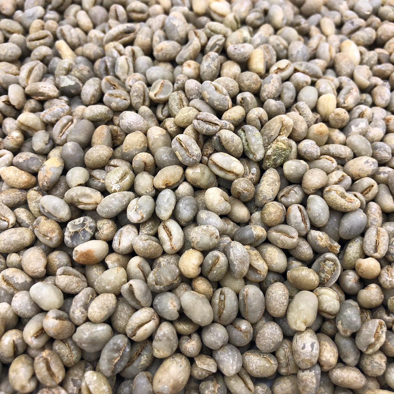 Yemen Mocca Peaberry Natural