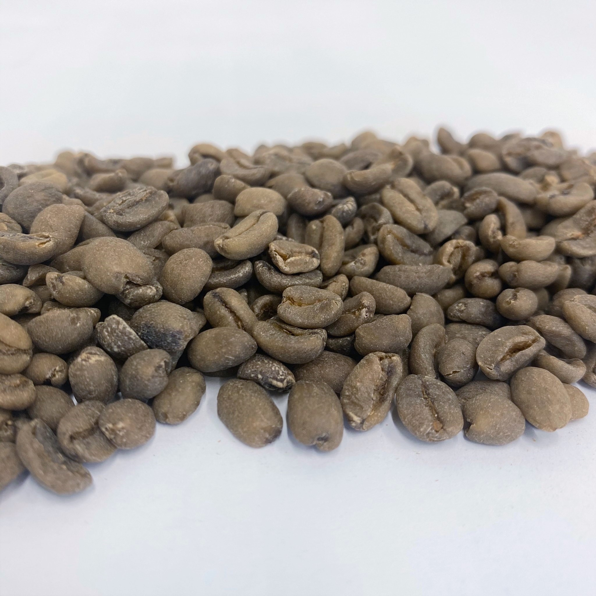 Morning Glory Organic Decaf Blend SWP